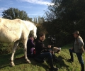 inquisitive-horses-became-a-problem-when-filming-at-bois-francais