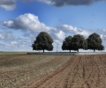 highland-cemetery-roclincourt