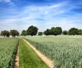 track-to-regina-trench-cemetery