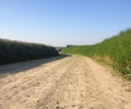 very-different-now-from-jungers-harrowing-descriptions-sunken-lane-at-guillemont