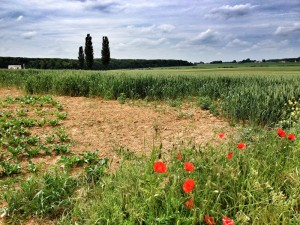 Guillemont - 12th Gloucesters (Bristol's Own) attacked close to here on 3 September 1916